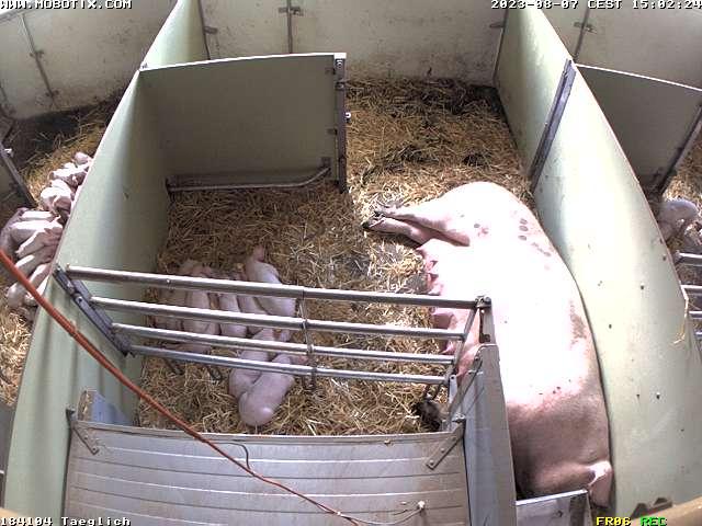 Die Webcam vom Suisseporcs-Schweinestall